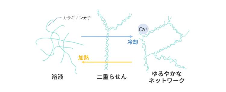 カラギナンとは~徹底解説!構造...